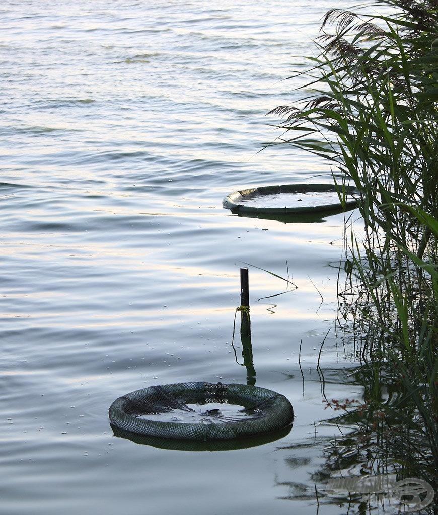 Az úszó gyűrűs haltartóban bármeddig életben lehet tartani a csalihalakat