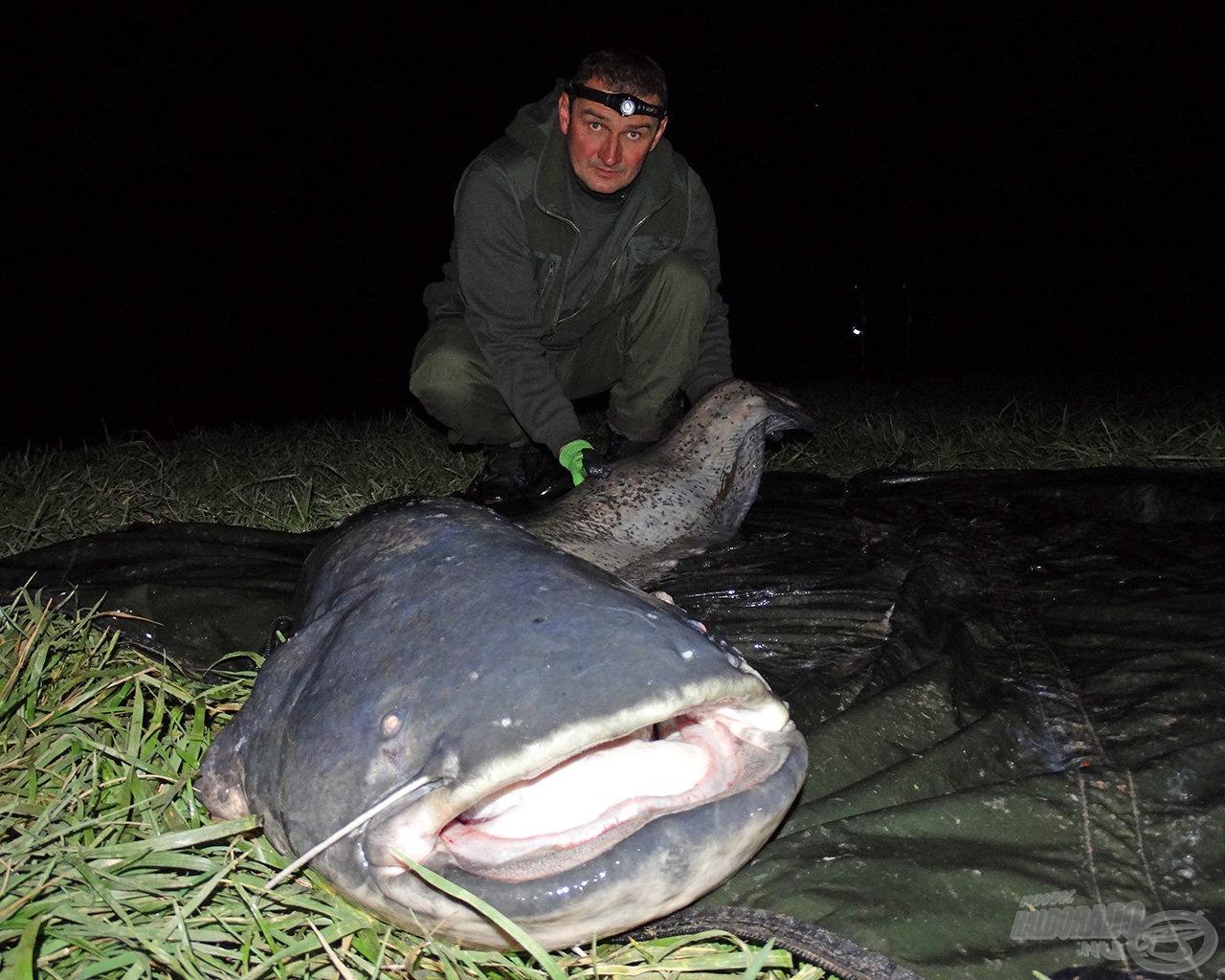 Norbi és az éjszakai hala