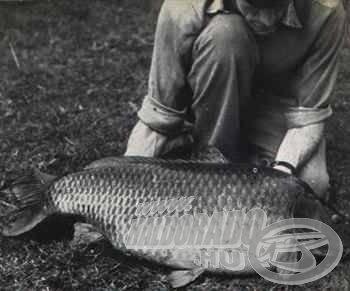 A feljegyzések szerint Angliában, bojlival már 1952-ben kifogták az első 20 kiló feletti pontyot!