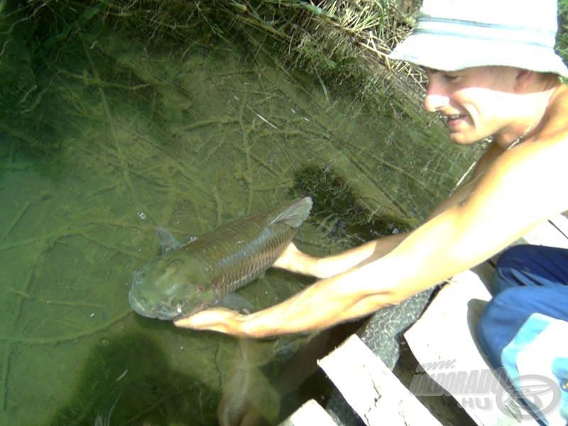 A bojlis technikával kifogott egyéb halakat is kötelező visszaengedni!