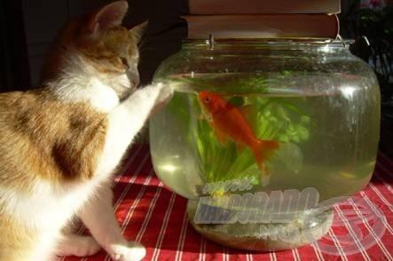 Barátkozzunk! A többit majd meglátjuk! (forrás: www.licska.freeblog.hu)