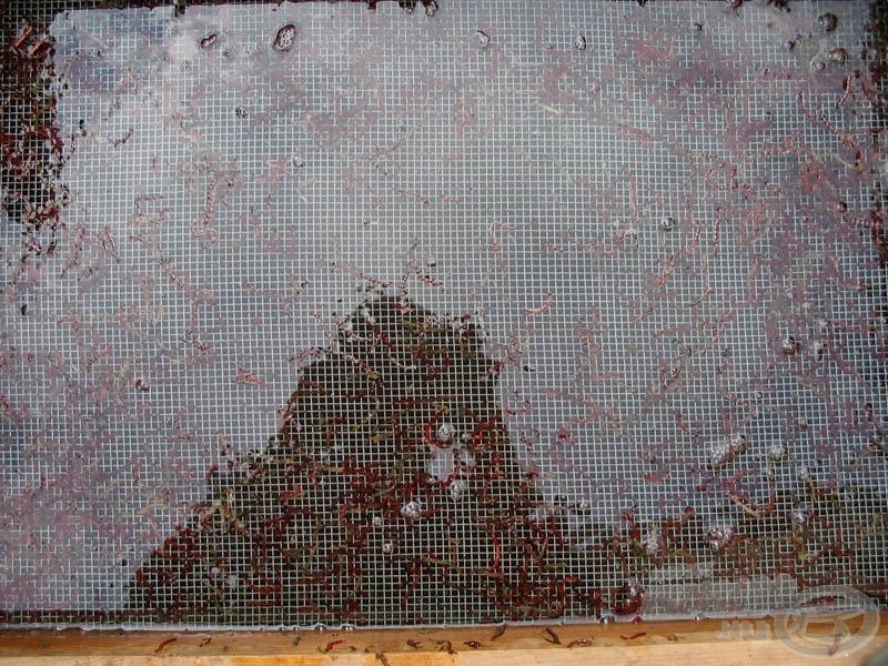 Mászatás során az elpusztult szúnyoglárvák fennmaradnak a rostán, és csak élő kerül a kereskedelembe