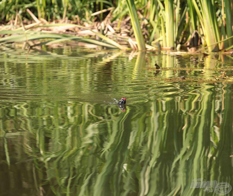 … és élethűen úszik
