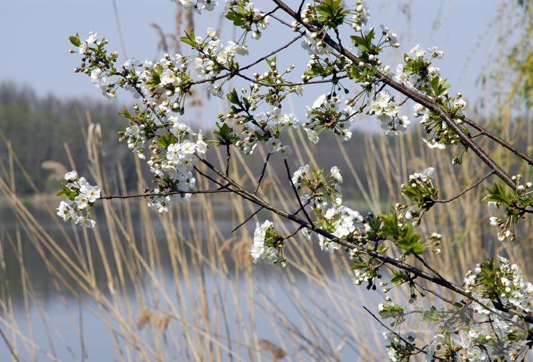 … és igazi tavasz vette kezdetét
