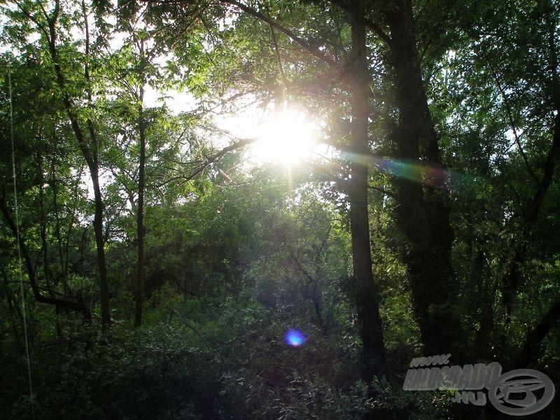 A fák között lebukó nap csodás látvány, és ez az időszak meghozza a csukák kapókedvét is