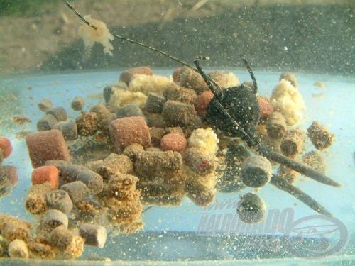 A víz alatti felvételek segítenek megérteni, hogy mi történik a különböző oldódási idővel rendelkező pelletekkel