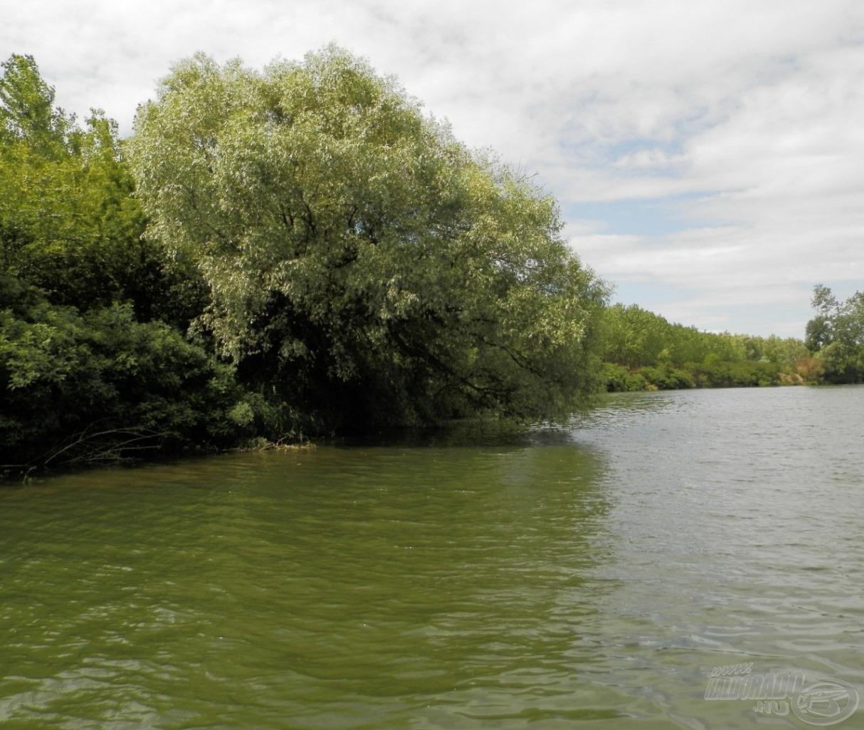 Kanyar külső ívén, víz fölé hajló fa - tuti domis hely
