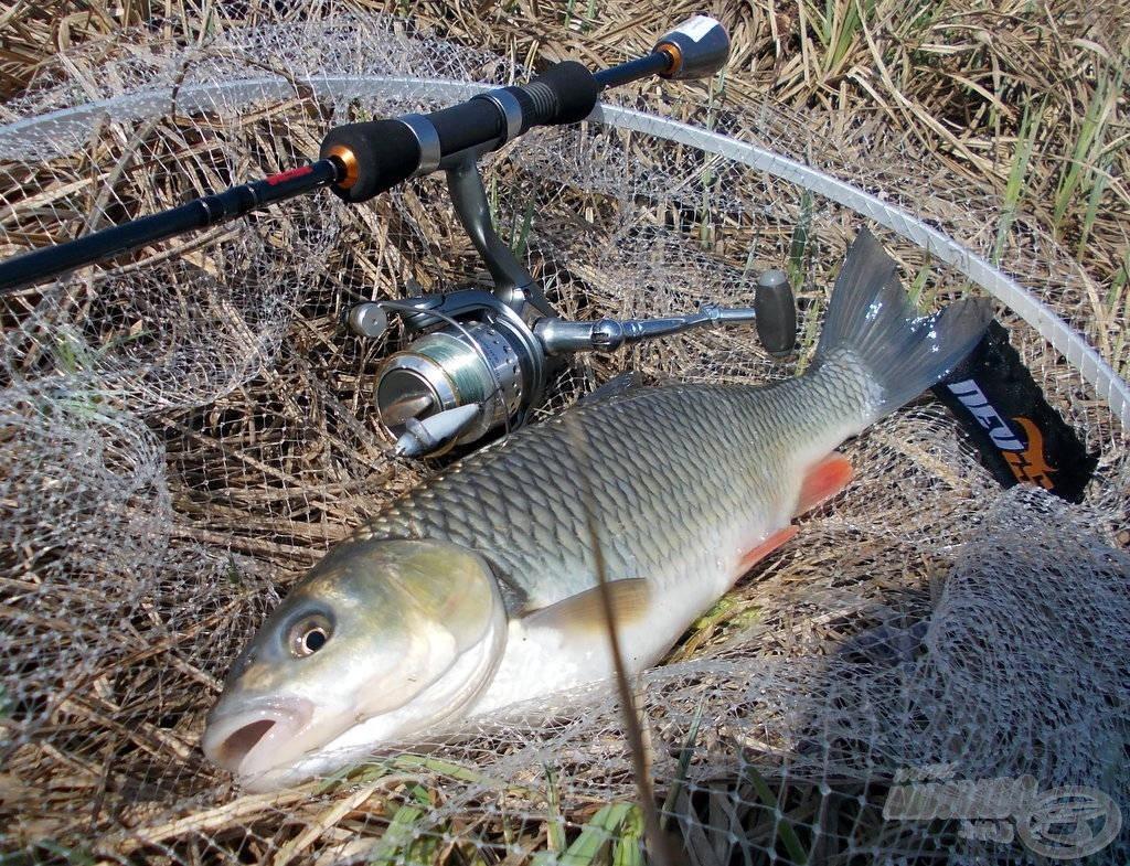 Domolykóvadászat