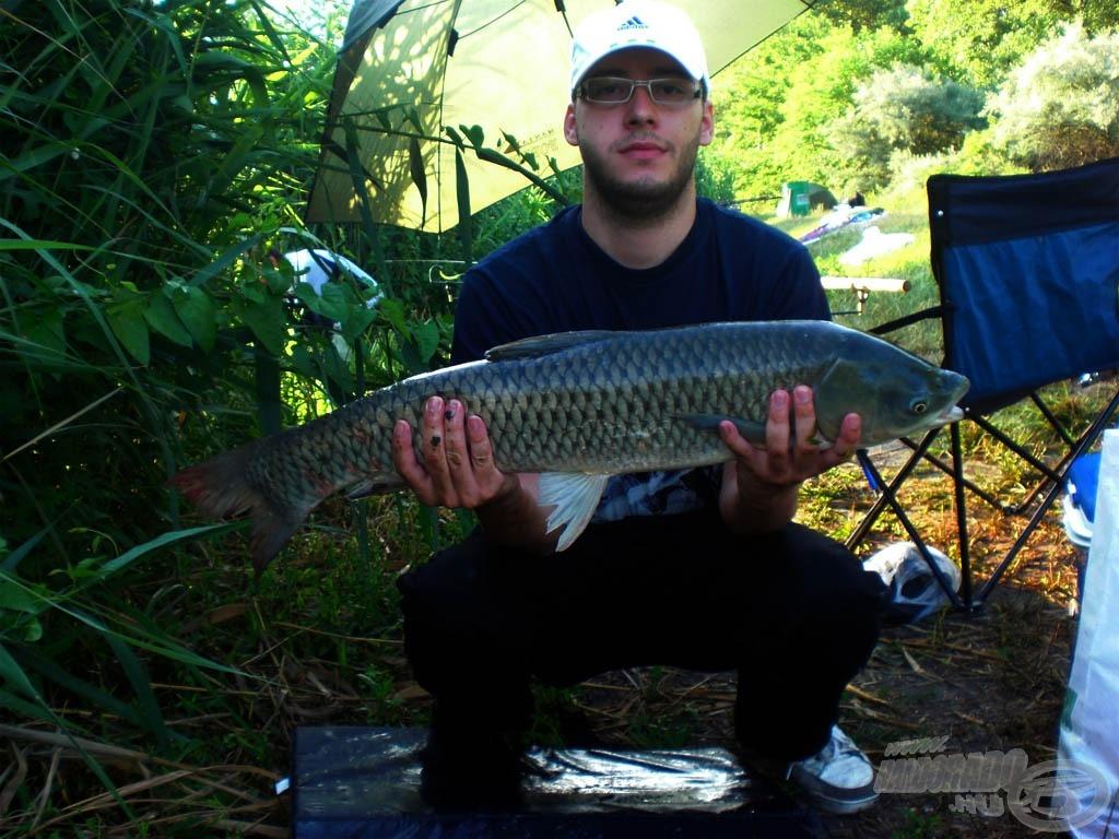 A nap első hala