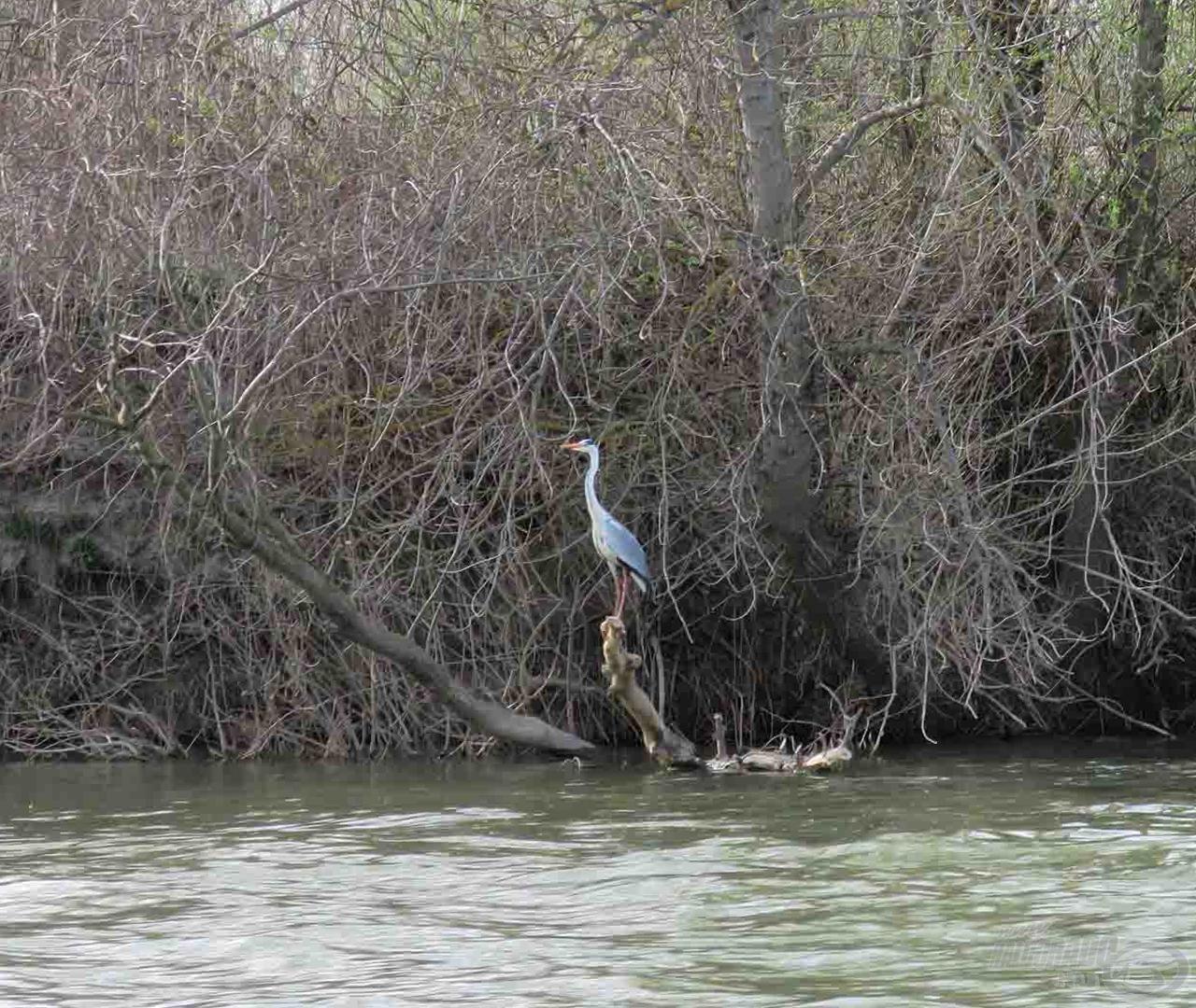 Minden évszakban imádok a folyón lenni, de tavasszal ez az érzés hatványozottan igaz
