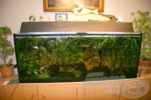 Egy jól megtervezett és berendezett akvárium akár a lakás ékköve is lehet