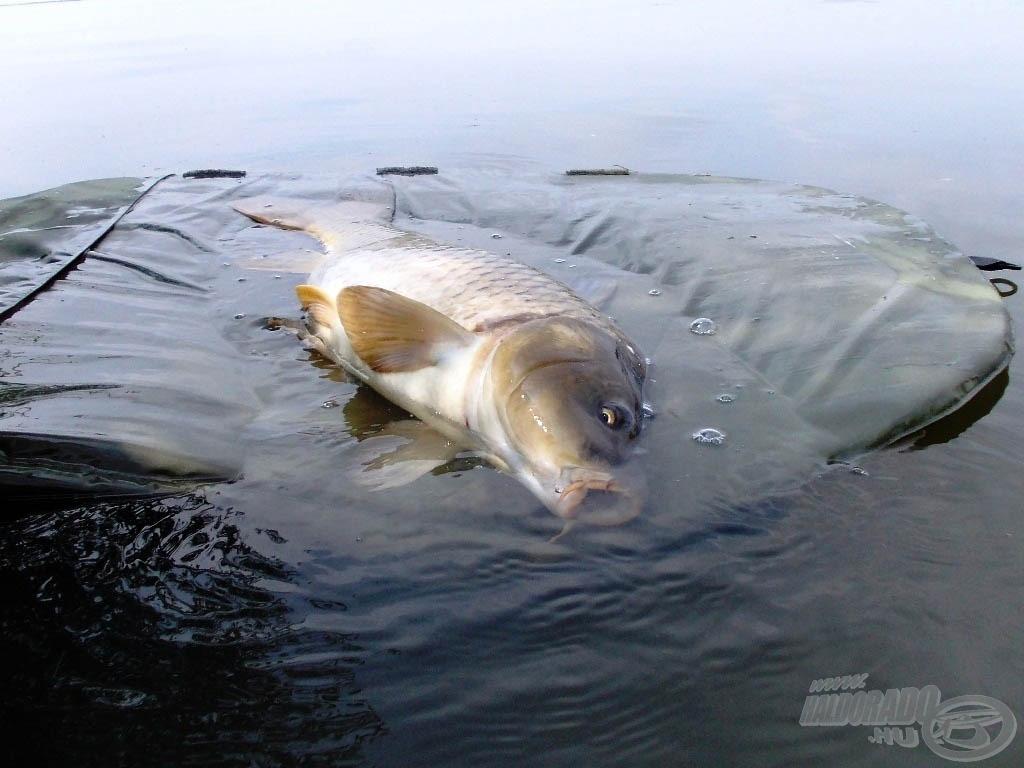 A melegebb idő jobban megviseli a parton a halakat, kell pár perc, hogy magukhoz térjenek