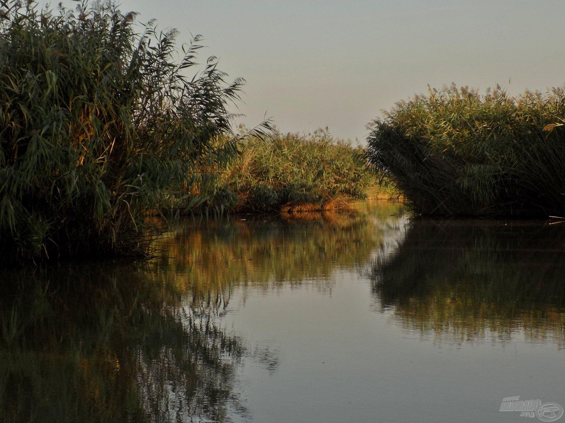 A Verseny-tó 2,6 hektáros vízterület, amely telis-tele van nádszigetekkel. Ez már önmagában, látványra is vadregényessé teszi a tavat, ráadásul a nádszigetek közvetlen közelében szívesen tartózkodnak a pontyok, amurok