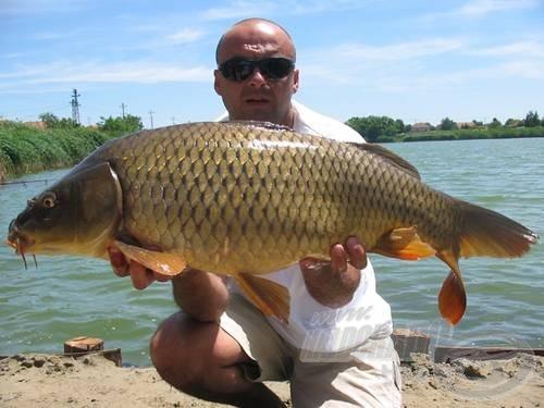 A legelszántabbak, mint például a 2004. évi pontyfogó világbajnokok, hogy igazi horgászkörülményeket biztosítsanak maguknak, tavat avattak, és benne…