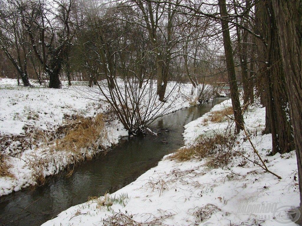 Idén elég későn érkezett meg a tél, januárban szinte tavaszias idő volt…