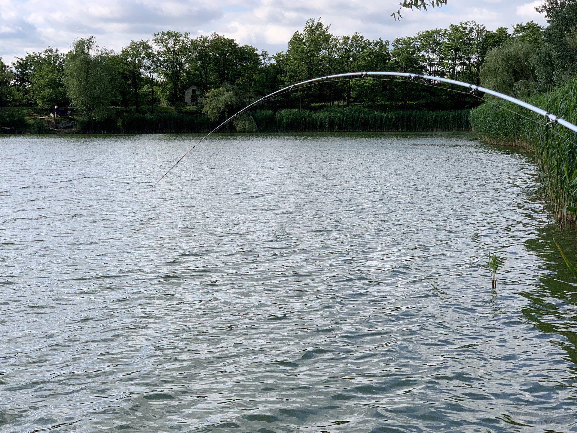 """A mai horgászat sem kímélte a feederbotjaimat, de mint mindig, most is """"derekasan"""" helytálltak"""