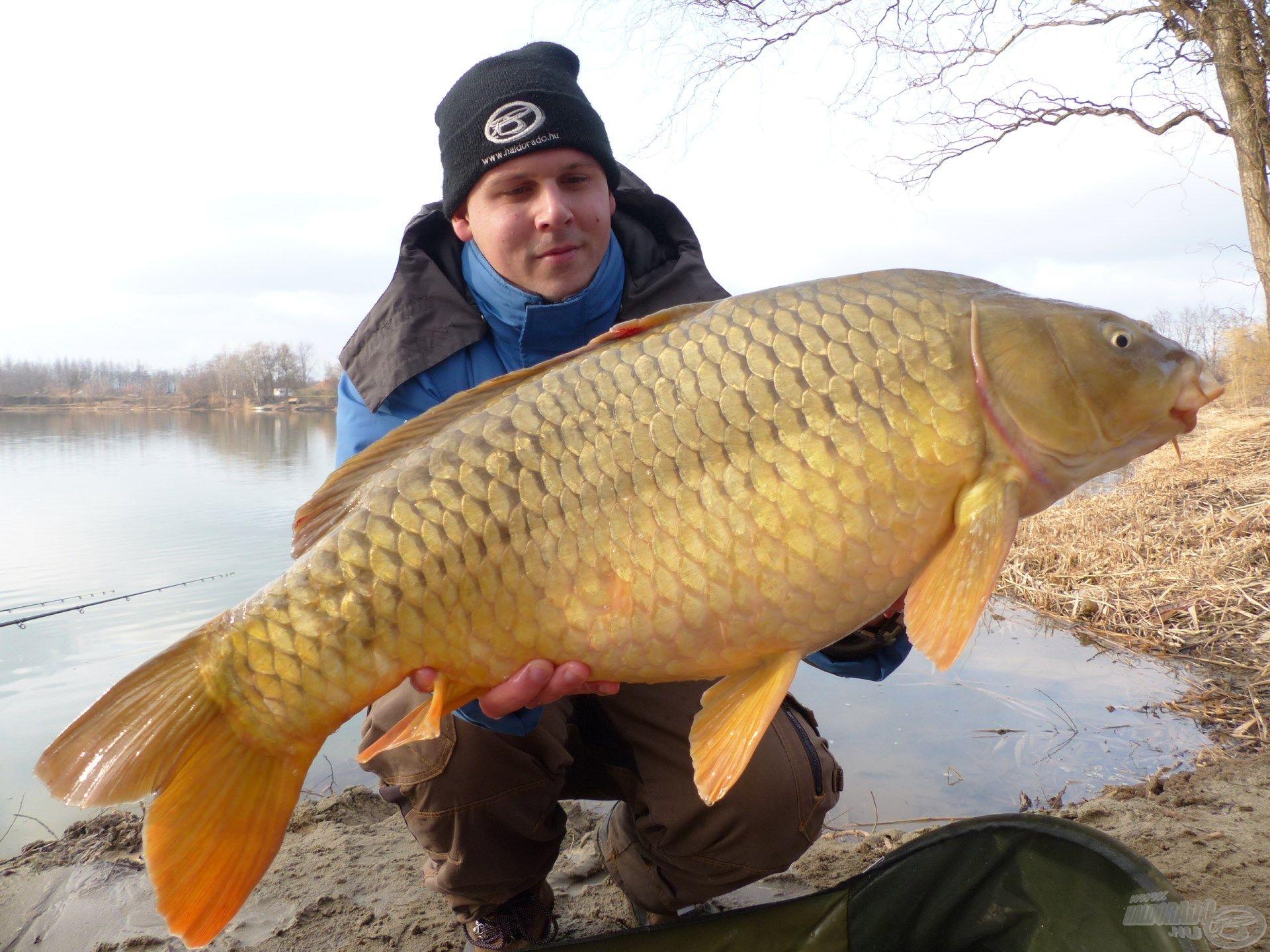 Az idei esztendő első 10 kg feletti hala volt ez a gyönyörű színekben pompázó tőponty
