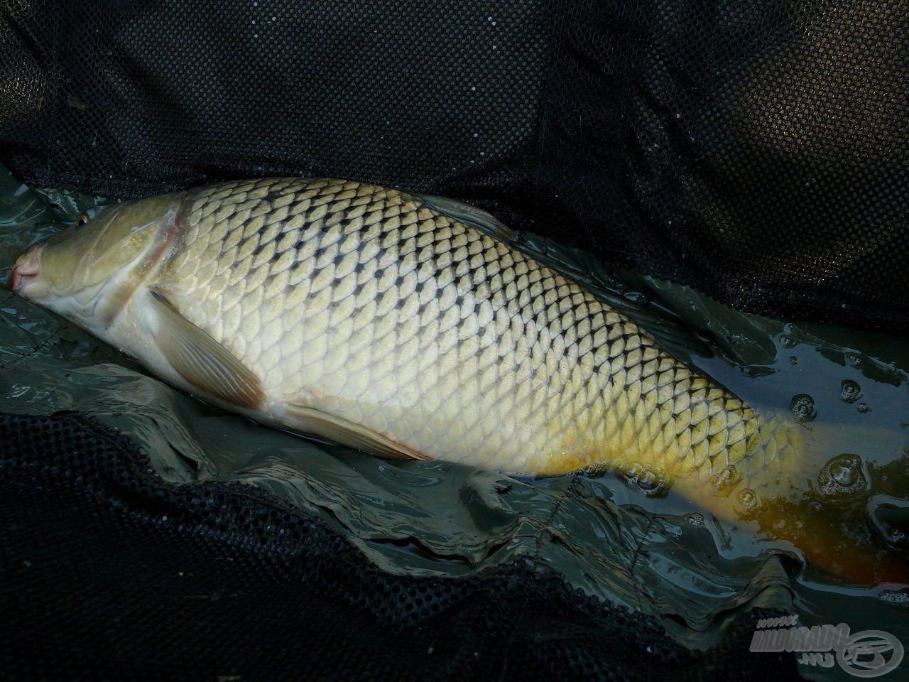 A kisebb halaknak is jár a tisztelet és a kíméletes bánásmód