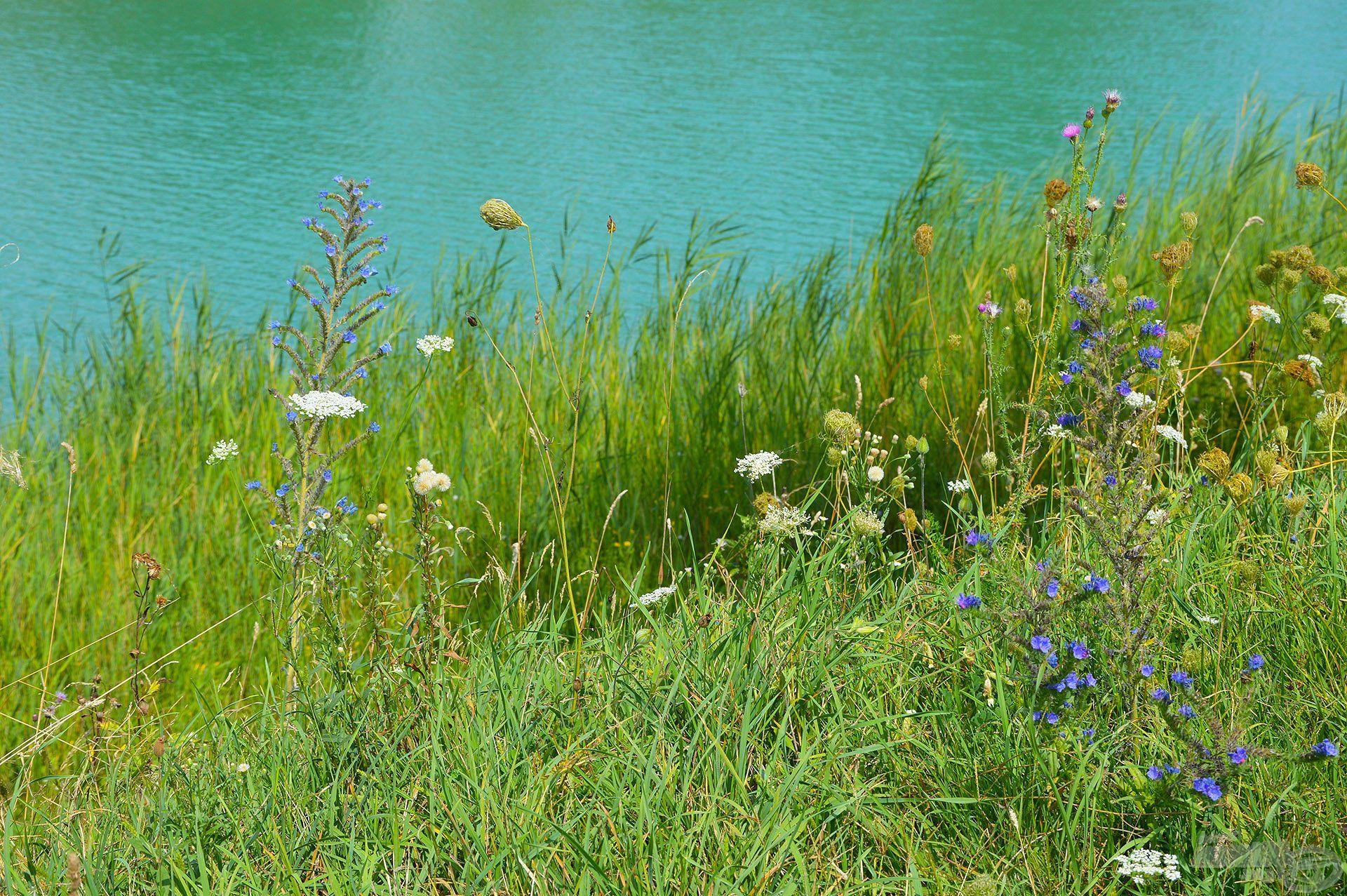 Kék víz, üde zöld part és gyönyörű színfoltjai