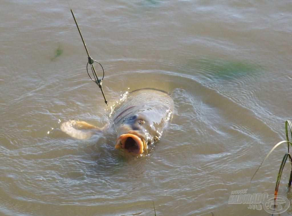 Lélegzetelállító látvány volt fárasztás közben meg-megpillantani a hatalmas halat