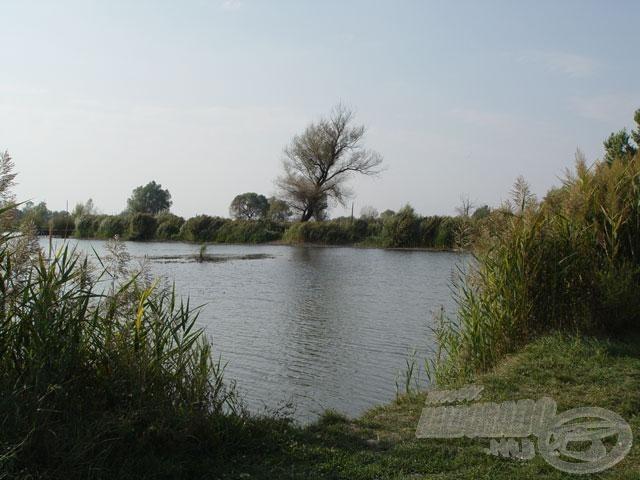 A tó dús növényzetű, gyönyörű környezete természetközeli érzést kelt az idelátogató horgászban…