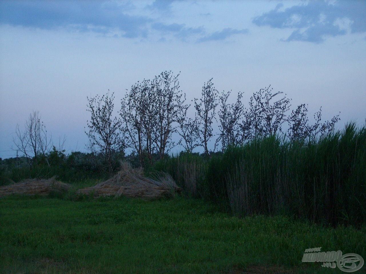 A mögöttem álló kopár fák ágai estére megteltek a pihenni vágyó seregélyek hadával