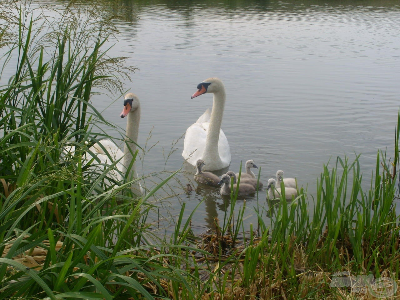 Generációk otthonául szolgál a tó és környezete