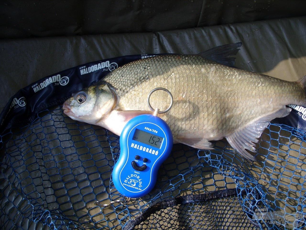 Első halam ez a szép, nagytermetű dévérkeszeg volt