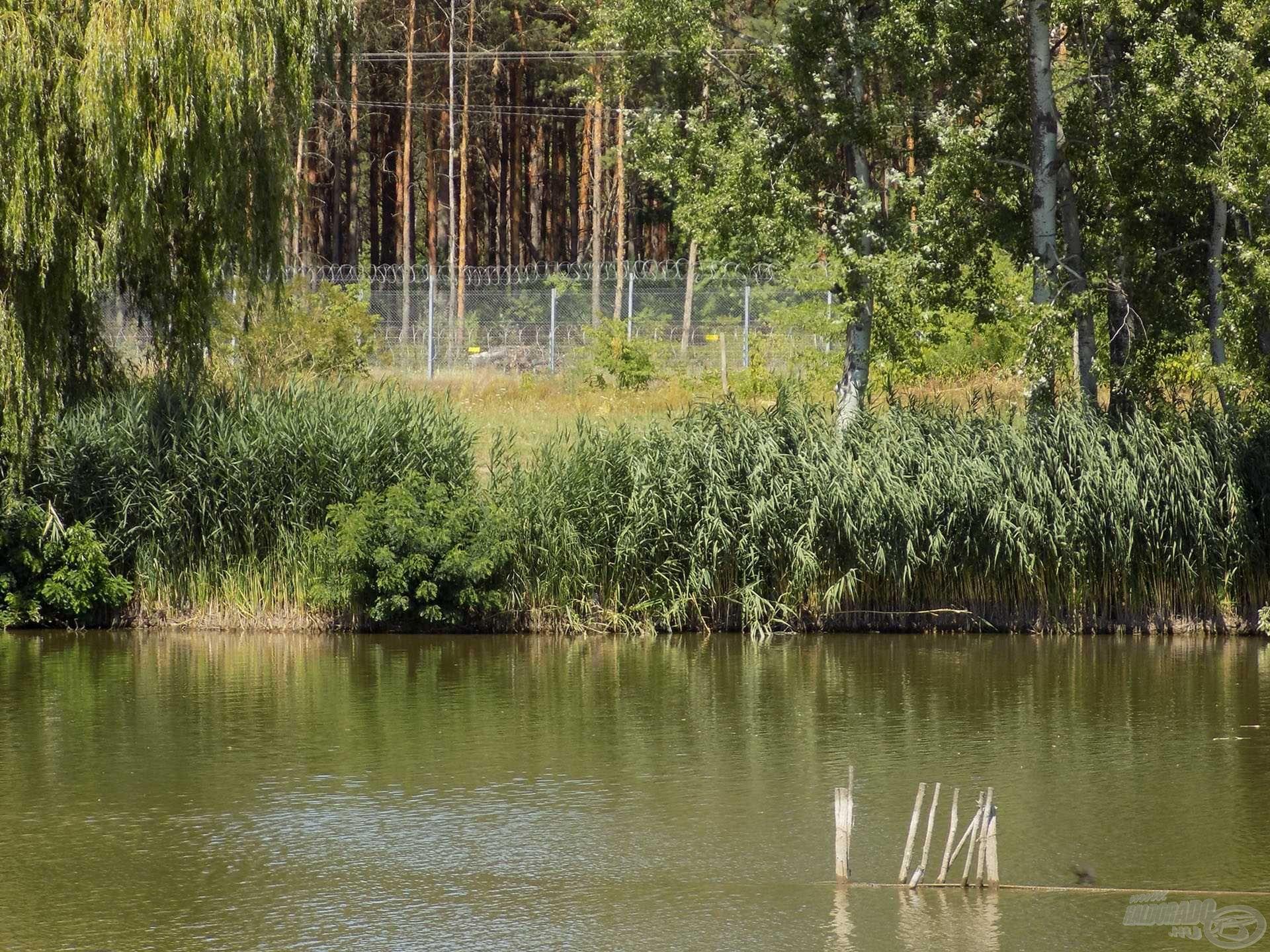 A fás-erdős részen elterülő kerítés mögött már Magyarország található. Ennyire közel van a határhoz a Palicsi-tó