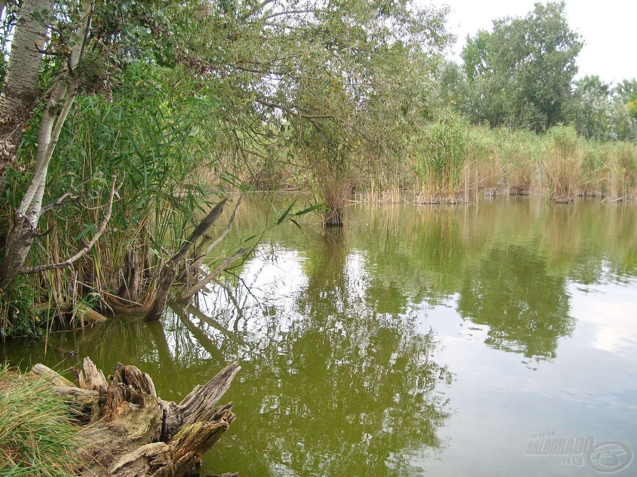 Ez a tó leginkább vadregényes és akadókban bővelkedő része