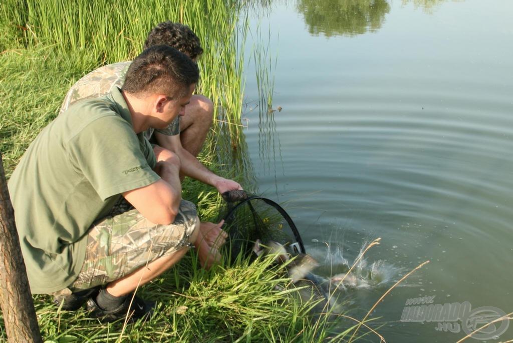 Minden halat gondosan visszahelyeztünk a vízbe