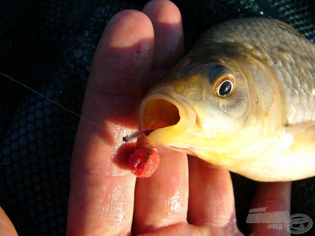 Jól akadt a horog, ez a csali még hozhat halat