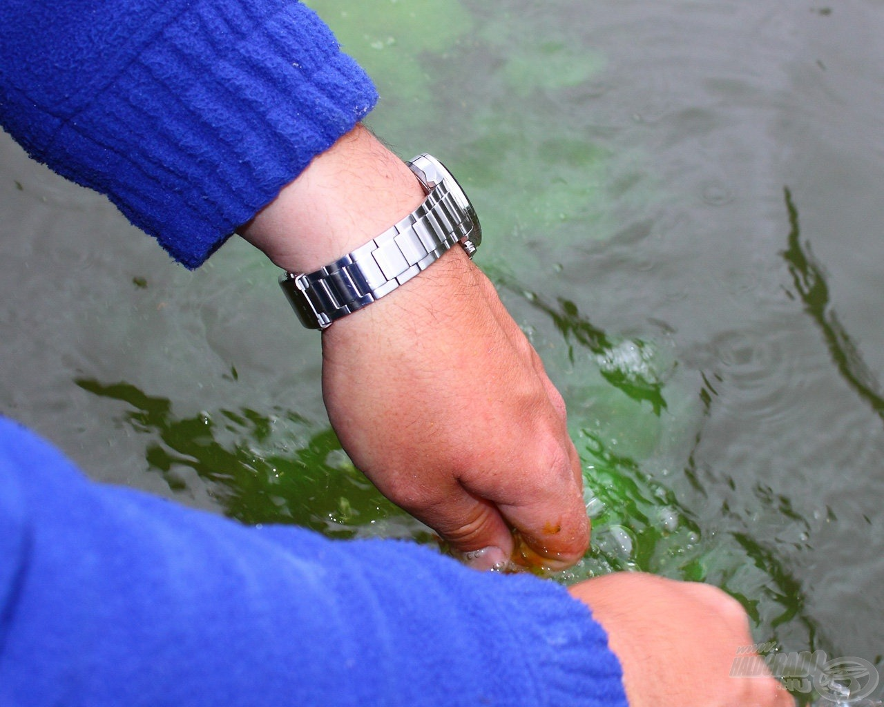 … a hatás pont az, amire számítottam, hosszú zöld csík jelezte, hol a kezem a vízben… de vajon tetszik-e majd a keszegnépnek?