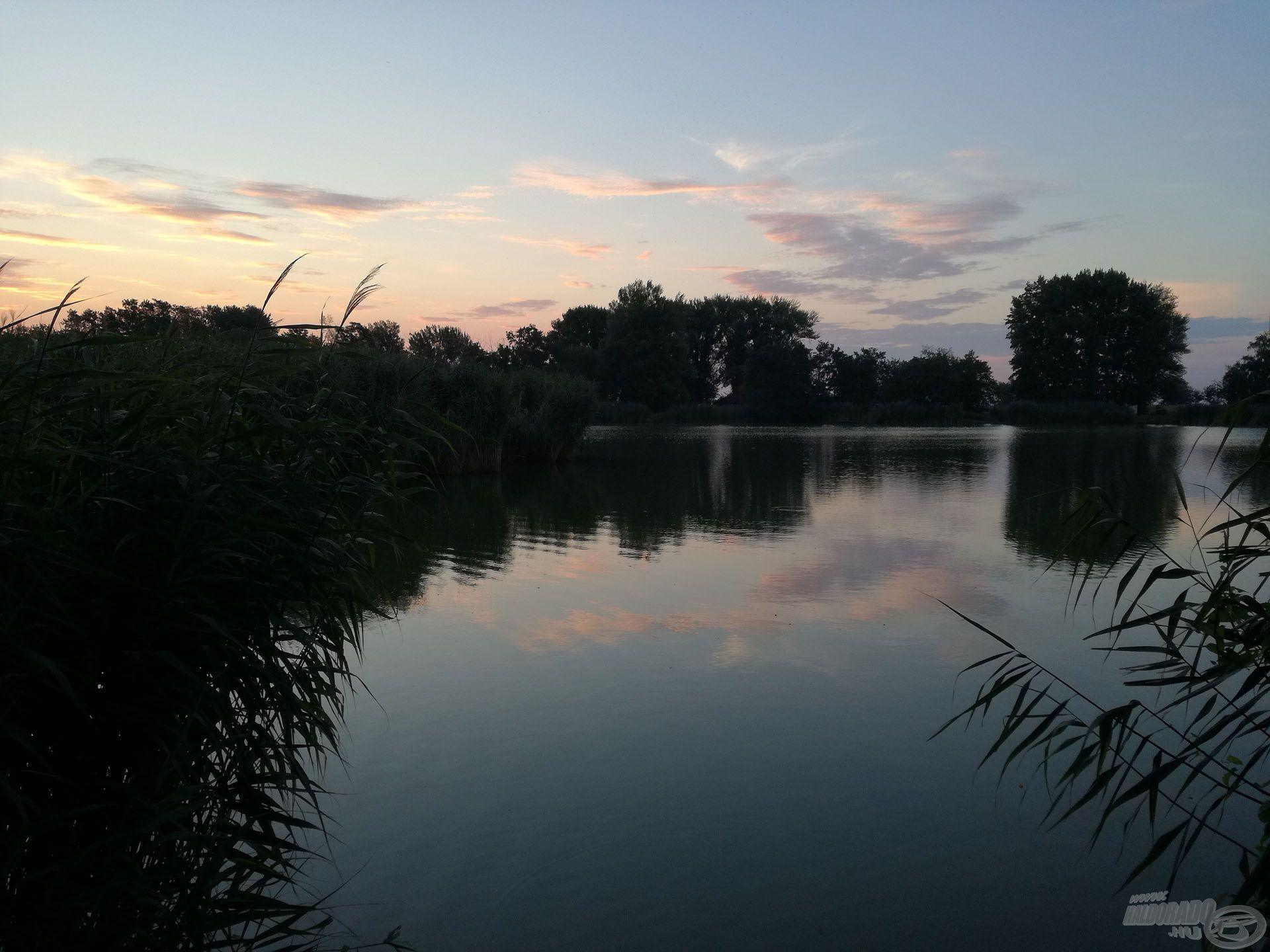 A tó közepe felé benyúló nádas