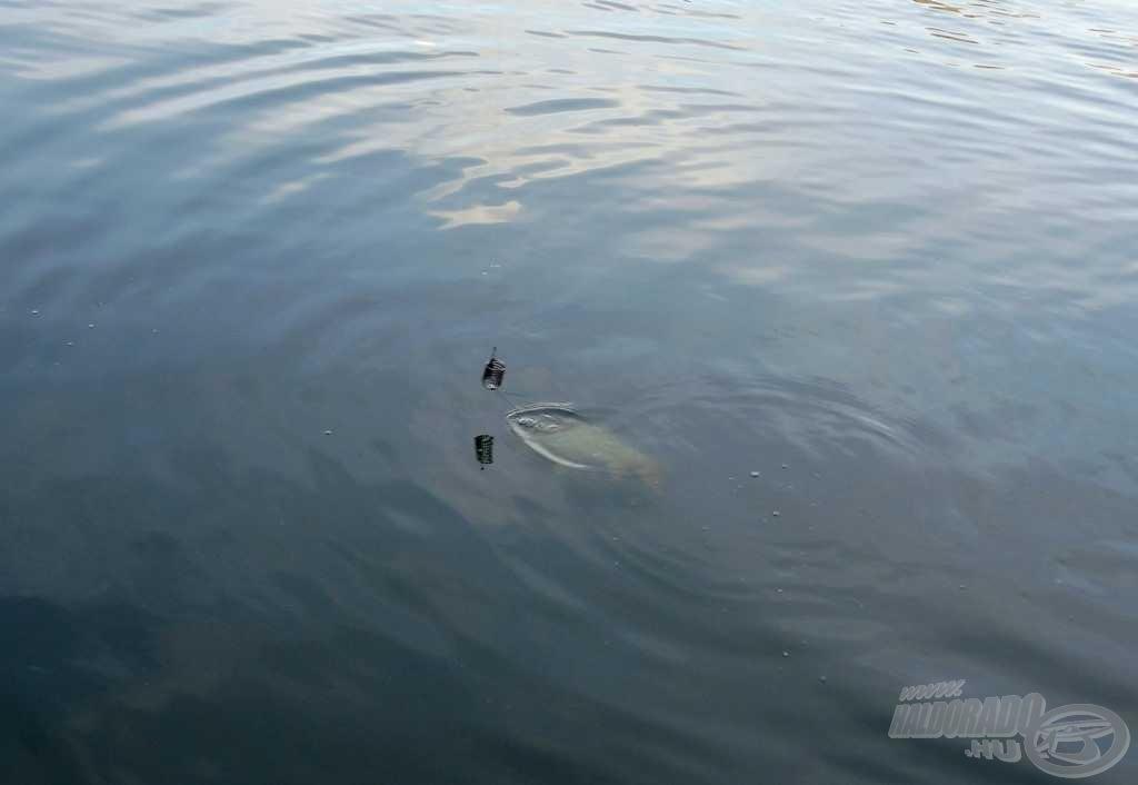 A tiszta vízben nagyon látványosak voltak a végjátékok