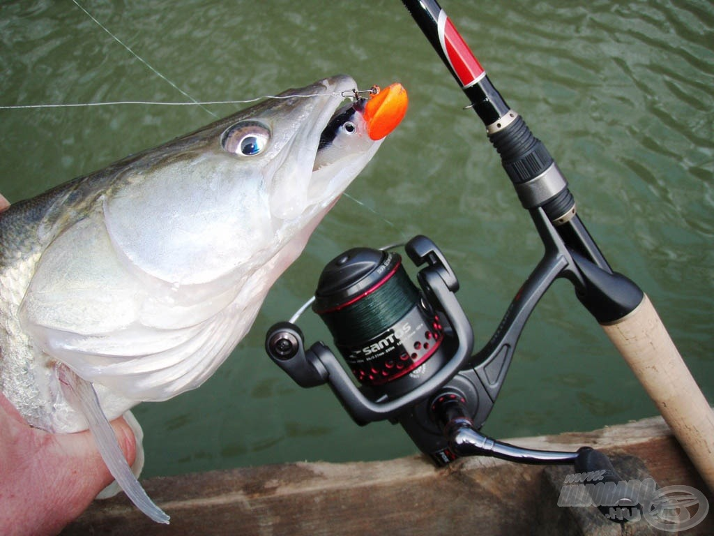 Jó hal, jó csali, jó felszerelés