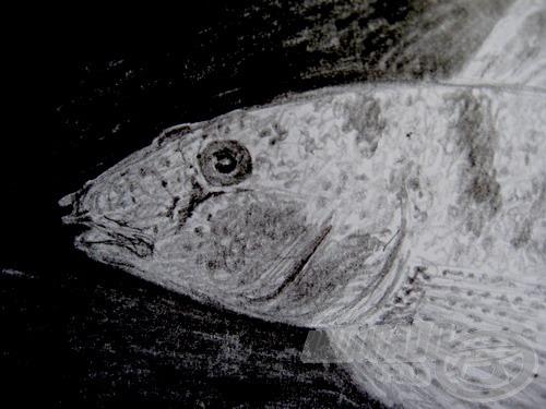 Tarka géb-portré, a jellegzetes csövecskékkel az orrnyílás tájékán
