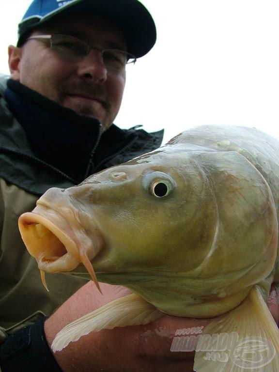 A bajuszszálak a halak ízlelésében kapnak szerepet