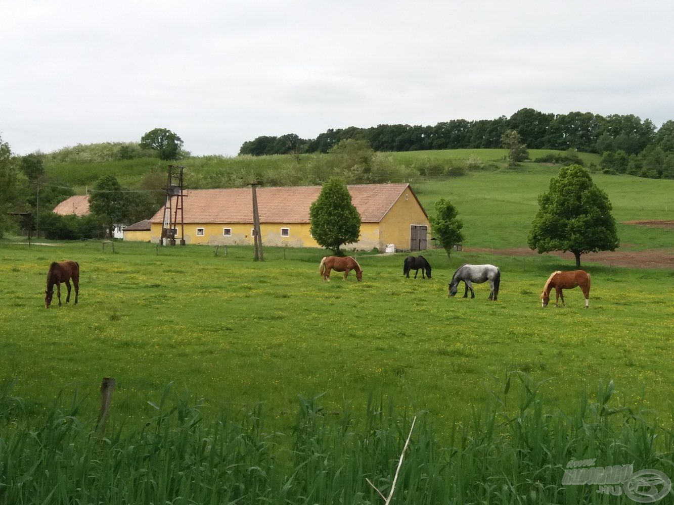 Legelésző lovak a hátunk mögött