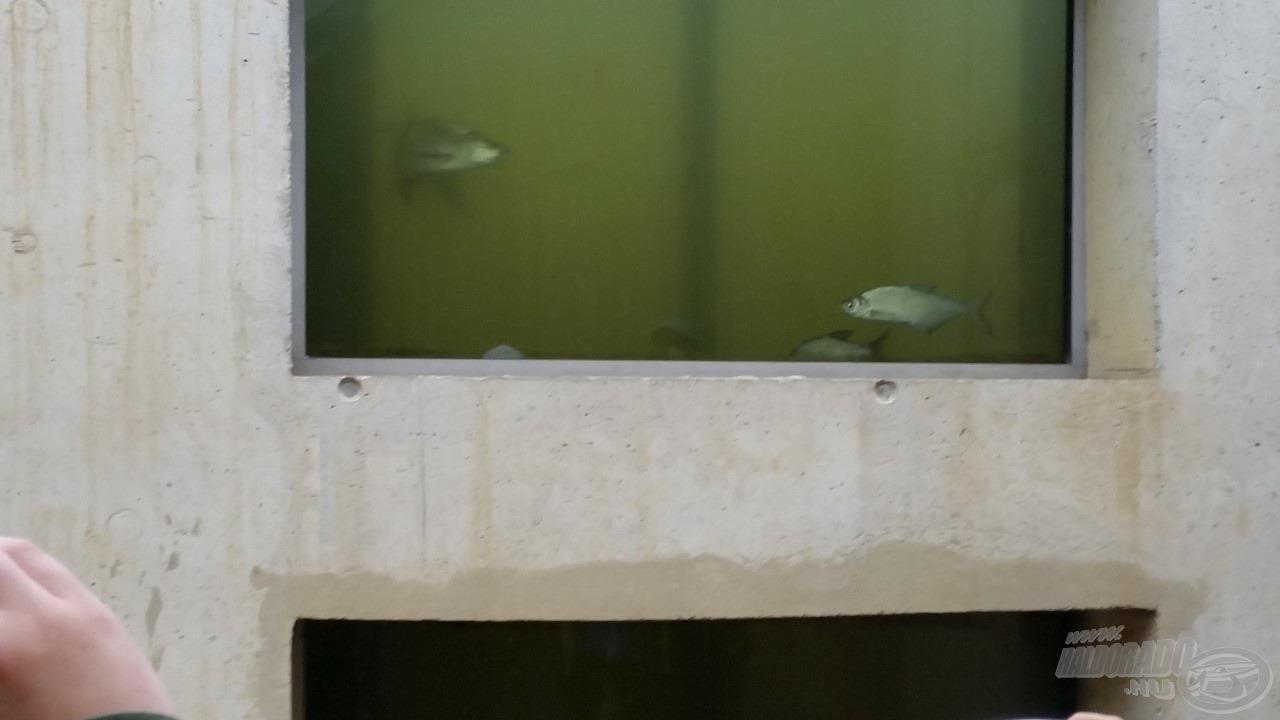 Mi sem számítottunk rá, de a betekintő ablak valóban megmutatja a hallépcsőt használó halakat!