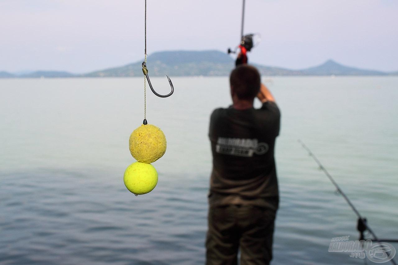 A balatoni pontyhorgászatok egyik fogós, szelektív csalija