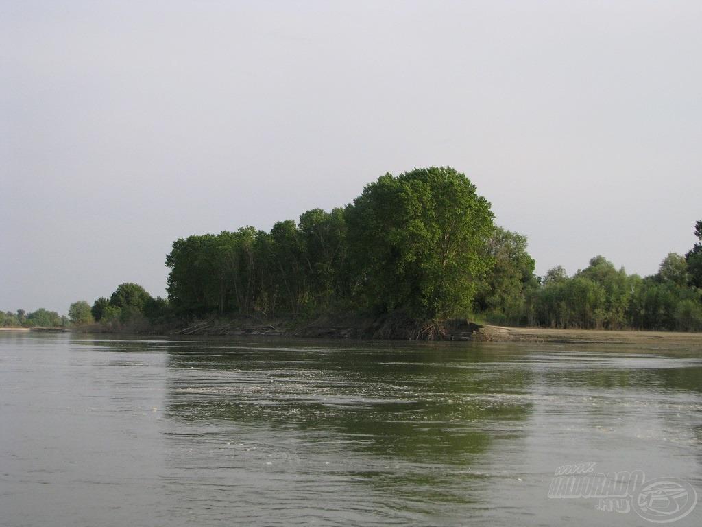 Tavaly a folyó nagyon dolgozott azon, hogy a medrét szélesítse, és ebben csak az évszázados fák akadályozták meg