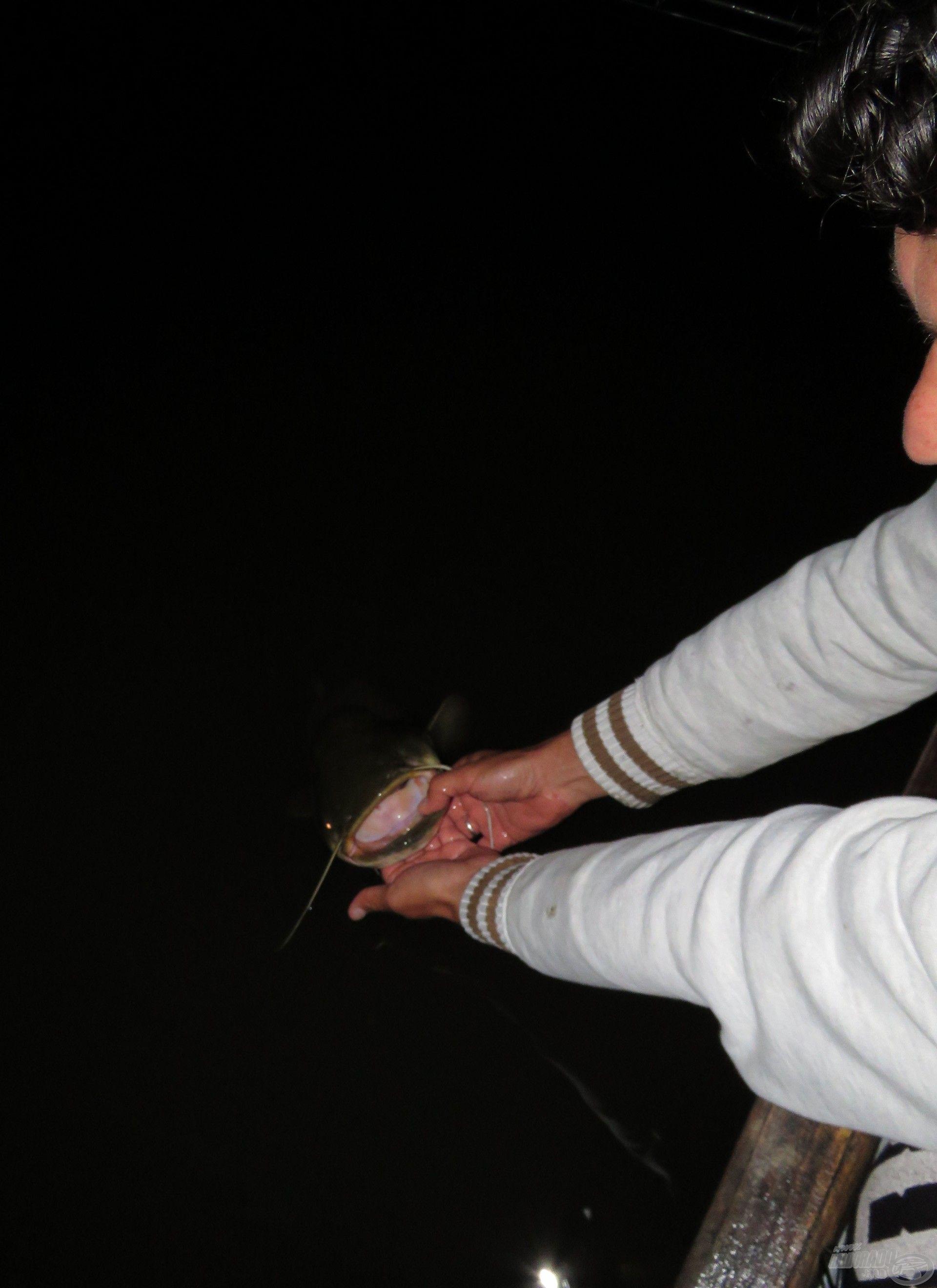 Tamás barátom épp a sokadik harcsáját engedi el egyazon éjszaka alatt…