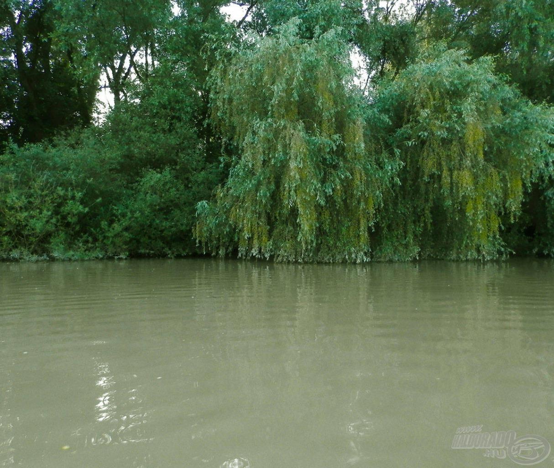 Vízre hajló lombkorona