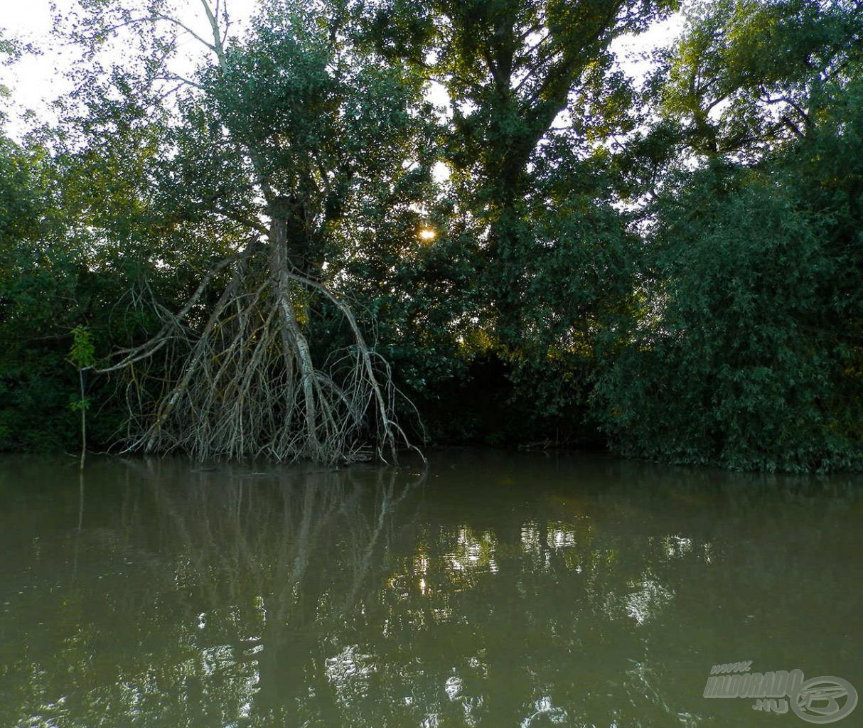 Vihar által letört fa