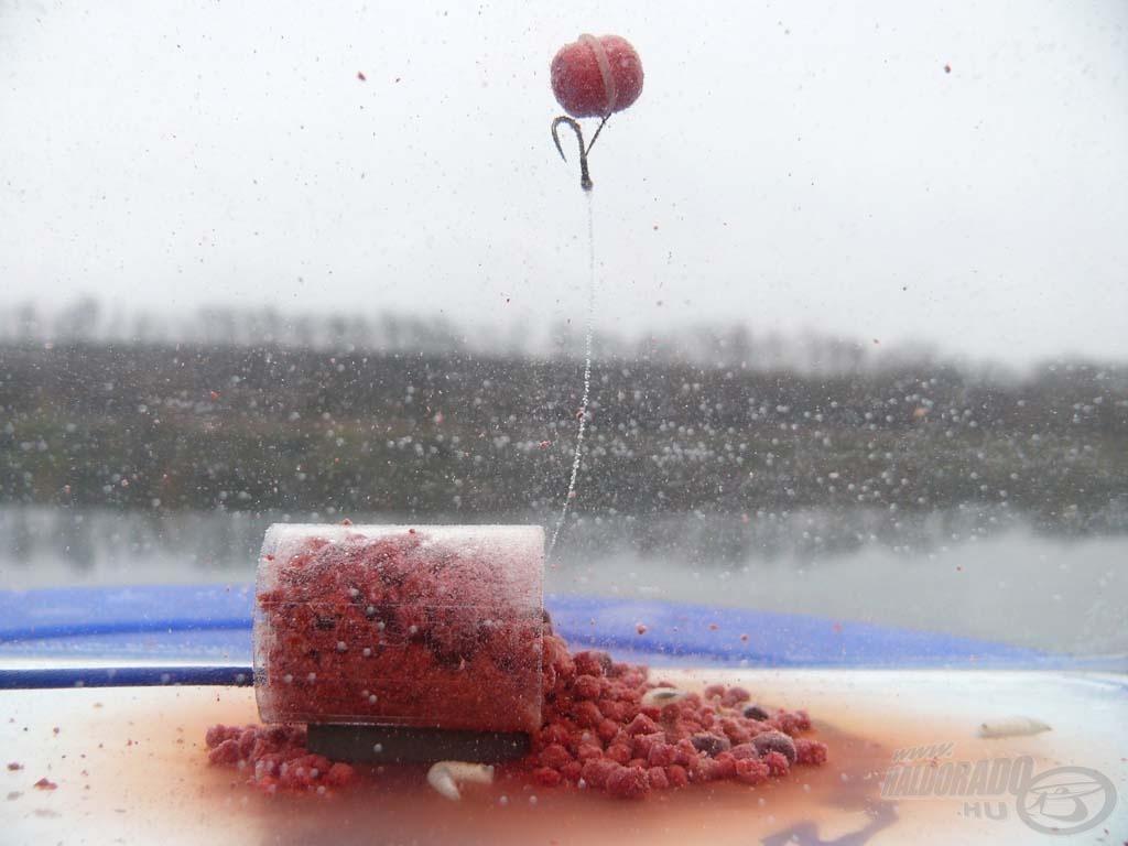 A Preston végszerelék így működik a víz alatt. Az Oldódó Lebegő Pellet kikerülhetetlen a finomságok után érdeklődő hal számára