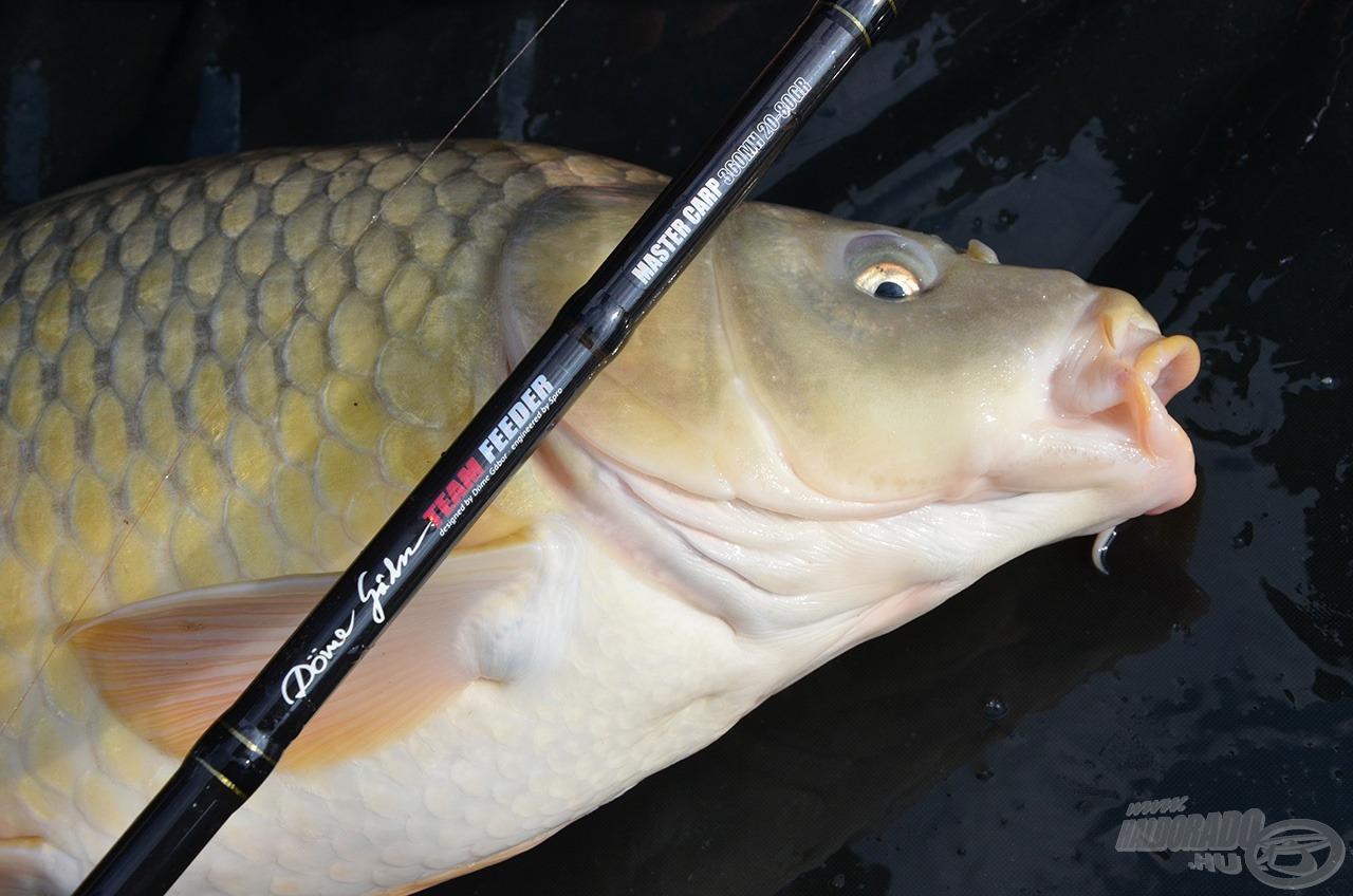 A rugalmas 360MH feederem hatékony társnak bizonyult a pontyok kora tavaszi, finom horgászata során