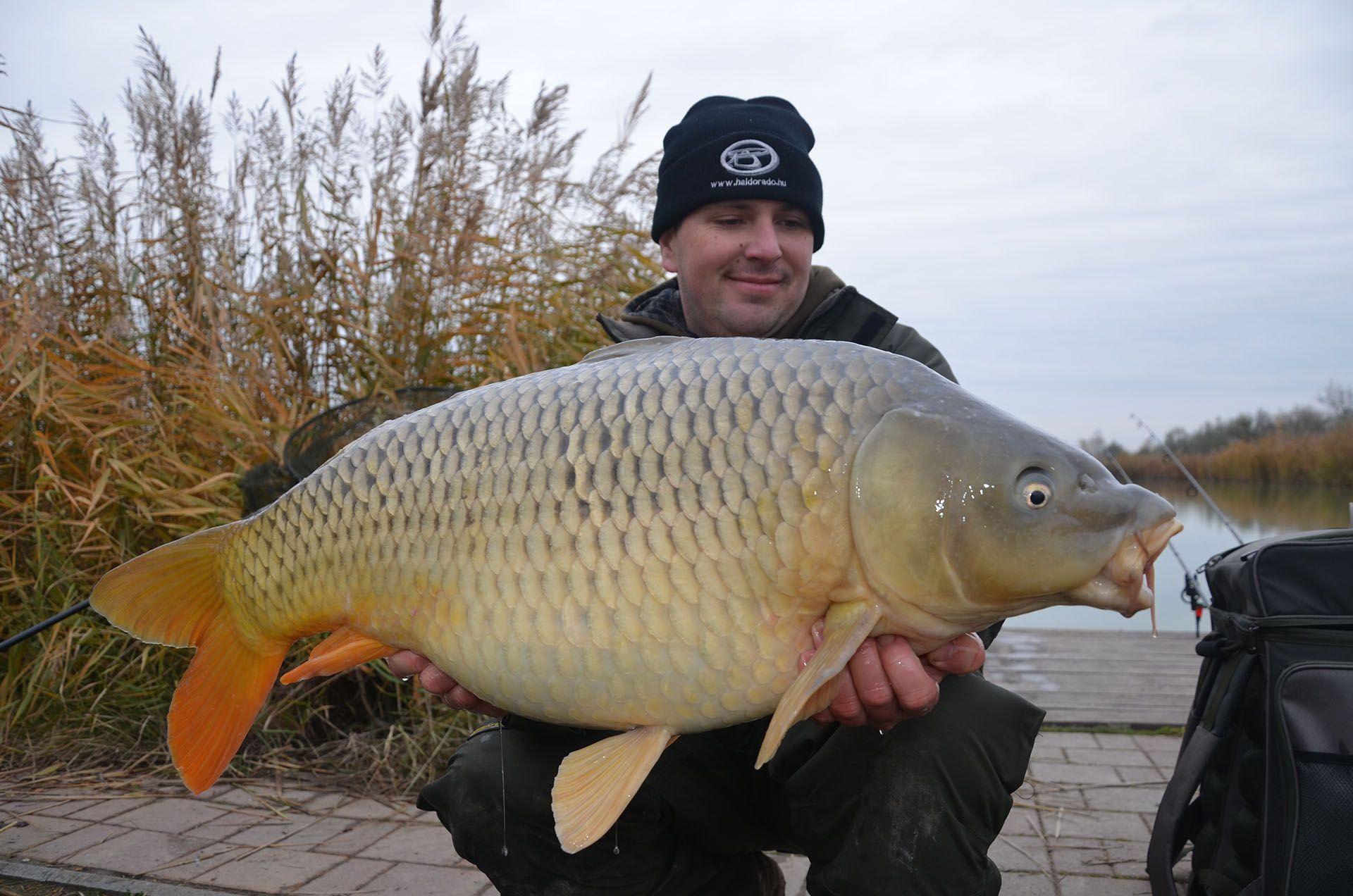 Sok-sok megfogott ponty bizonyította a rapid nagyponty-horgászat hatékonyságát