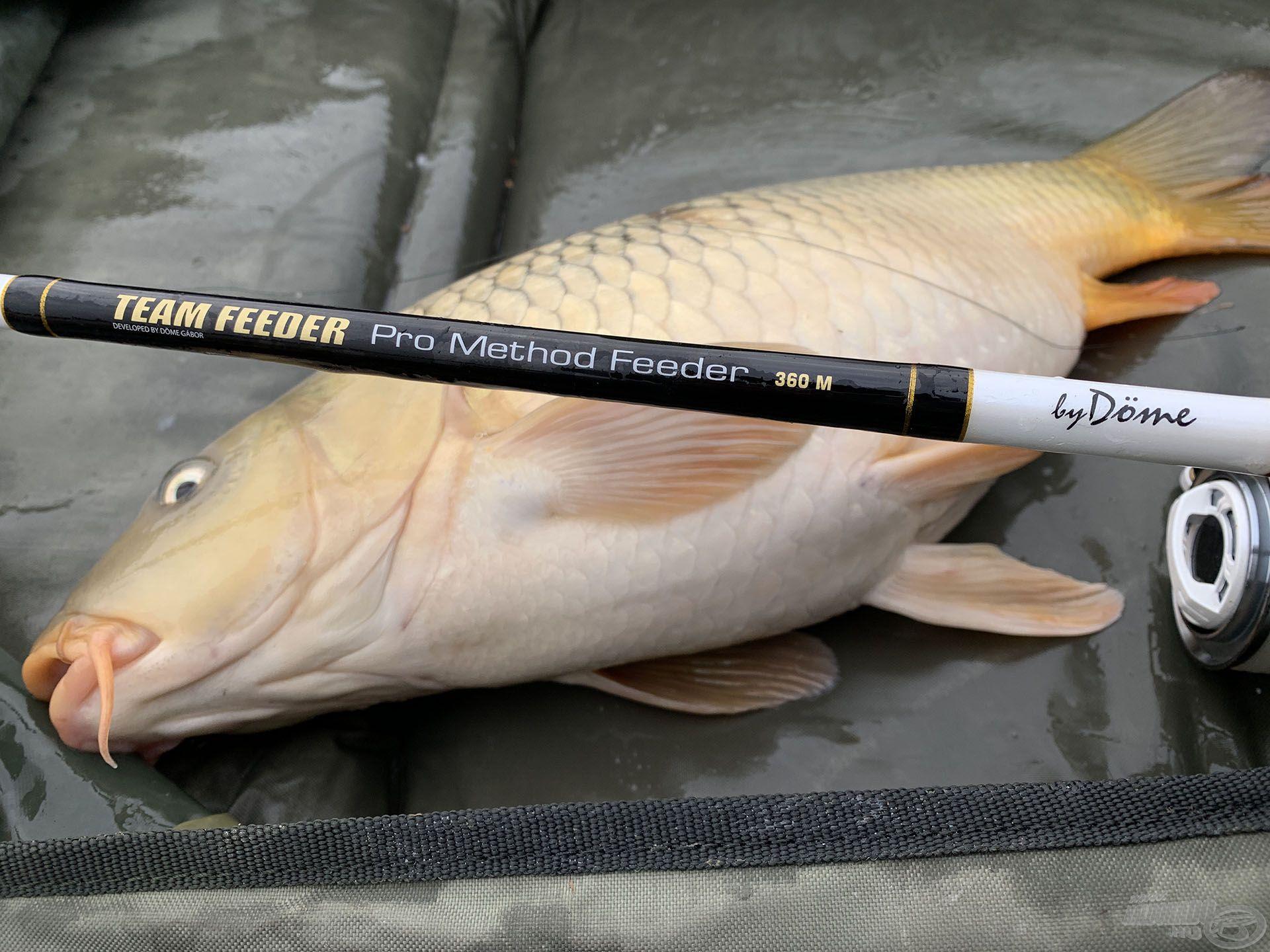 A By Döme TEAM FEEDER Pro Method Feeder 360 M tökéletes társ volt a finom horgászatban