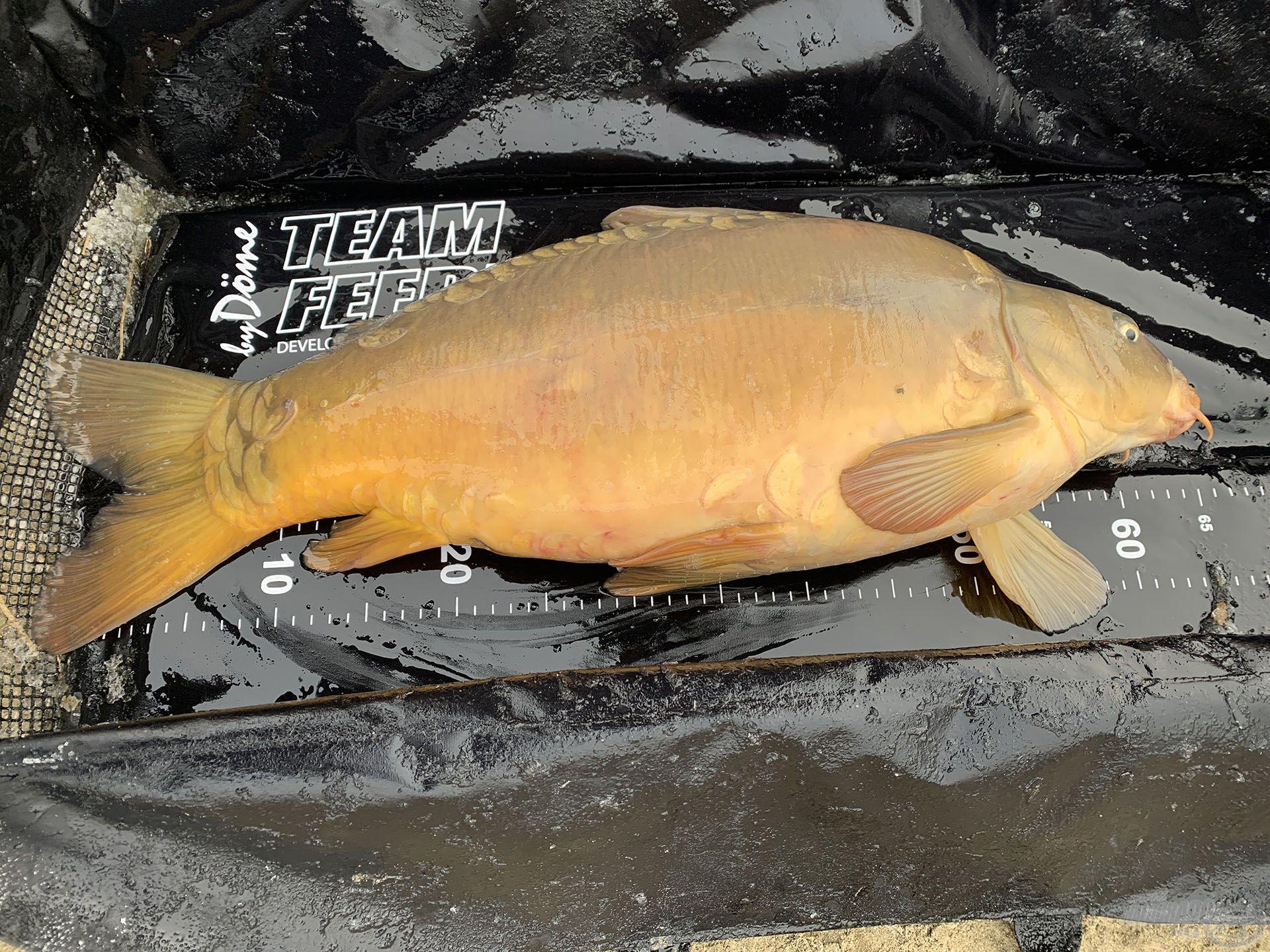 A halak tömege a legritkább esetben érdekel, de az új pontymatraccal a hosszát könnyű megmérni
